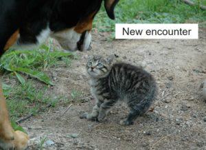 新たな出会い